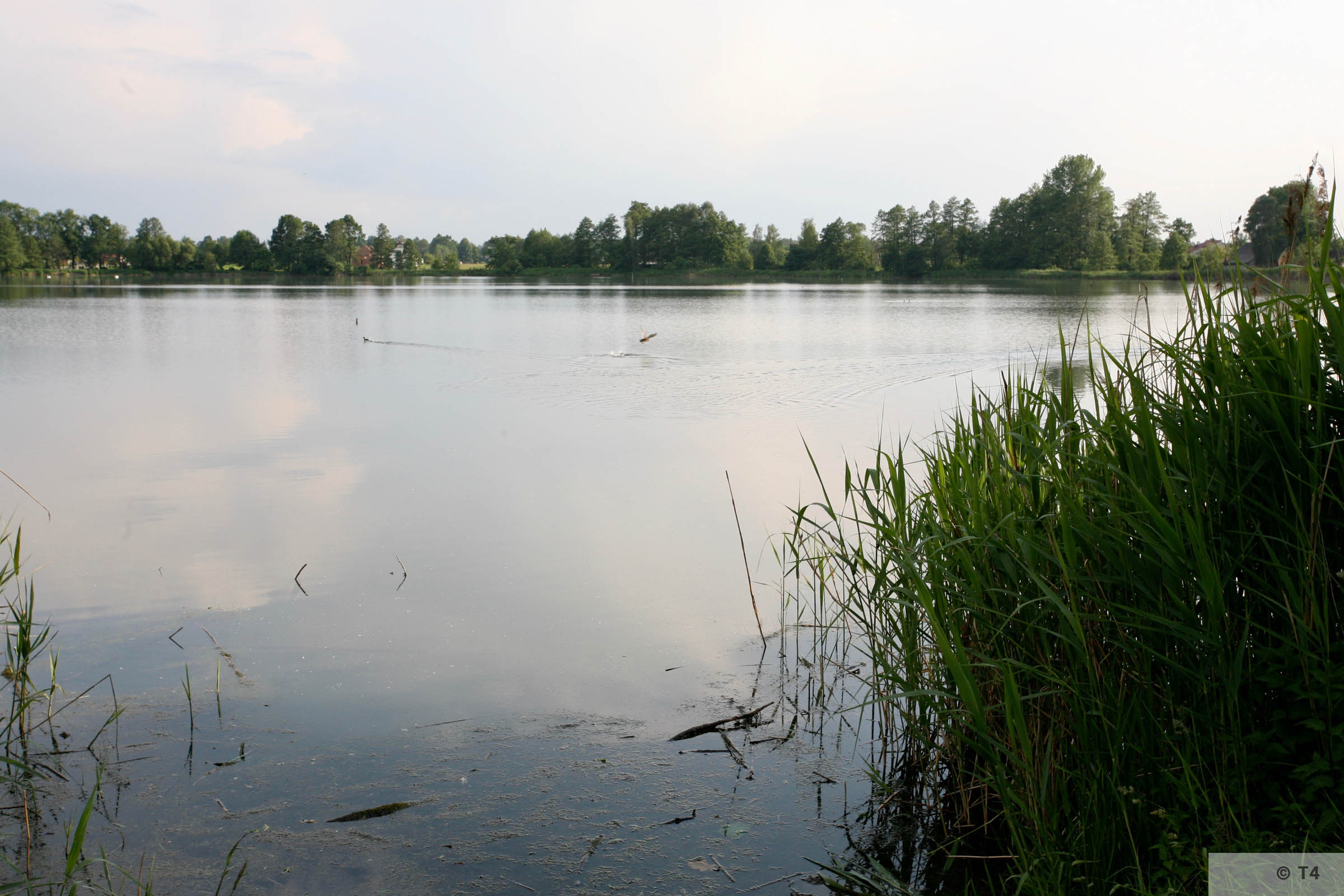 Fishponds where the Kommando Fischerei worked. 2006 T4 5075