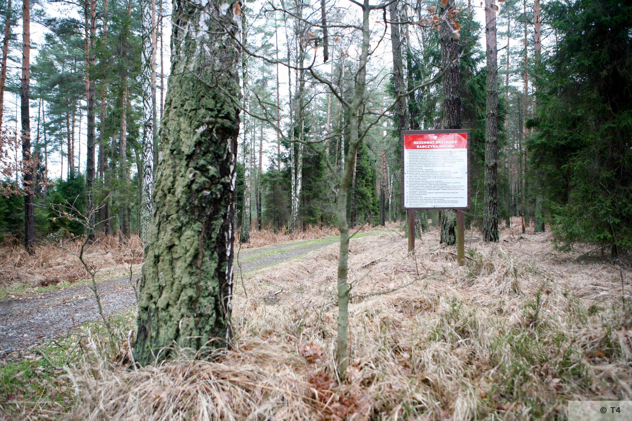 Forest near Radostowice. 2007 T4 4505