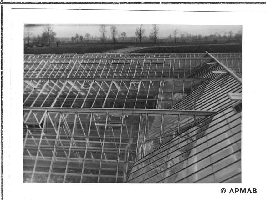 Greenhouses on the horticultural farm. 1941-44 APMAB 20995 172