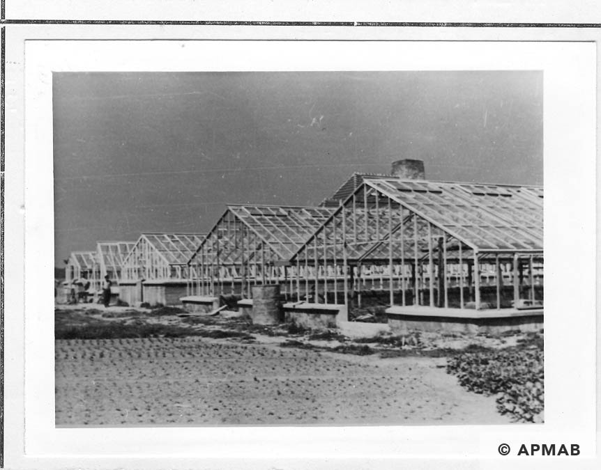 Greenhouses on the horticultural farm. 1941-44 APMAB 20995 173