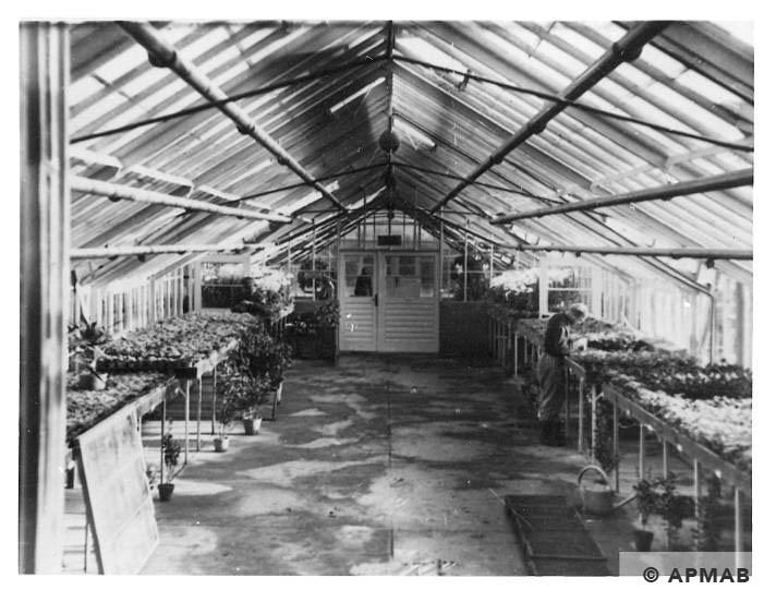 Inside glasshouse in Rajsko. Photo by Bauleitung d. Waffen SS u. Polizei KL Auschwitz. APMAB 20995 177