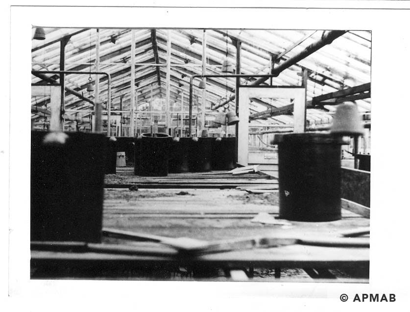Interior of greenhouse where prisoners worked. 1946 APMAB 20983 22