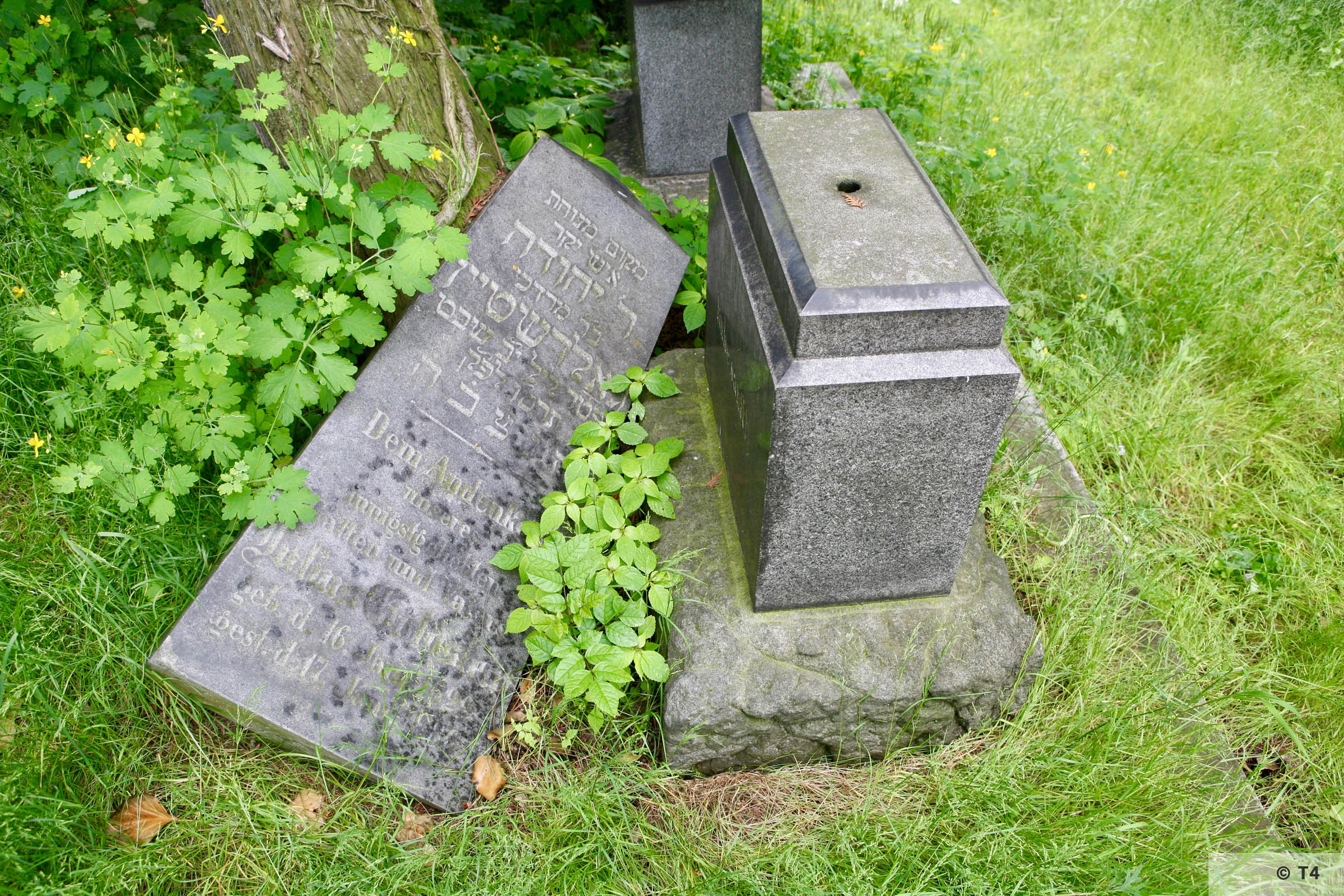 Jewish cemetery in Prudnik. 2006 T4 5244
