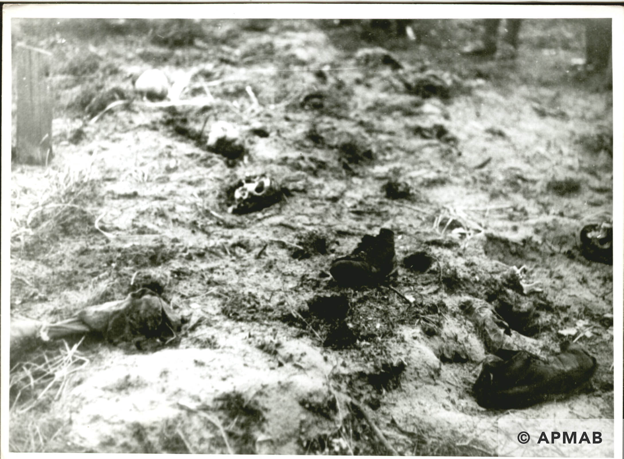 Mass grave. Probably 1946 APMAB 6290