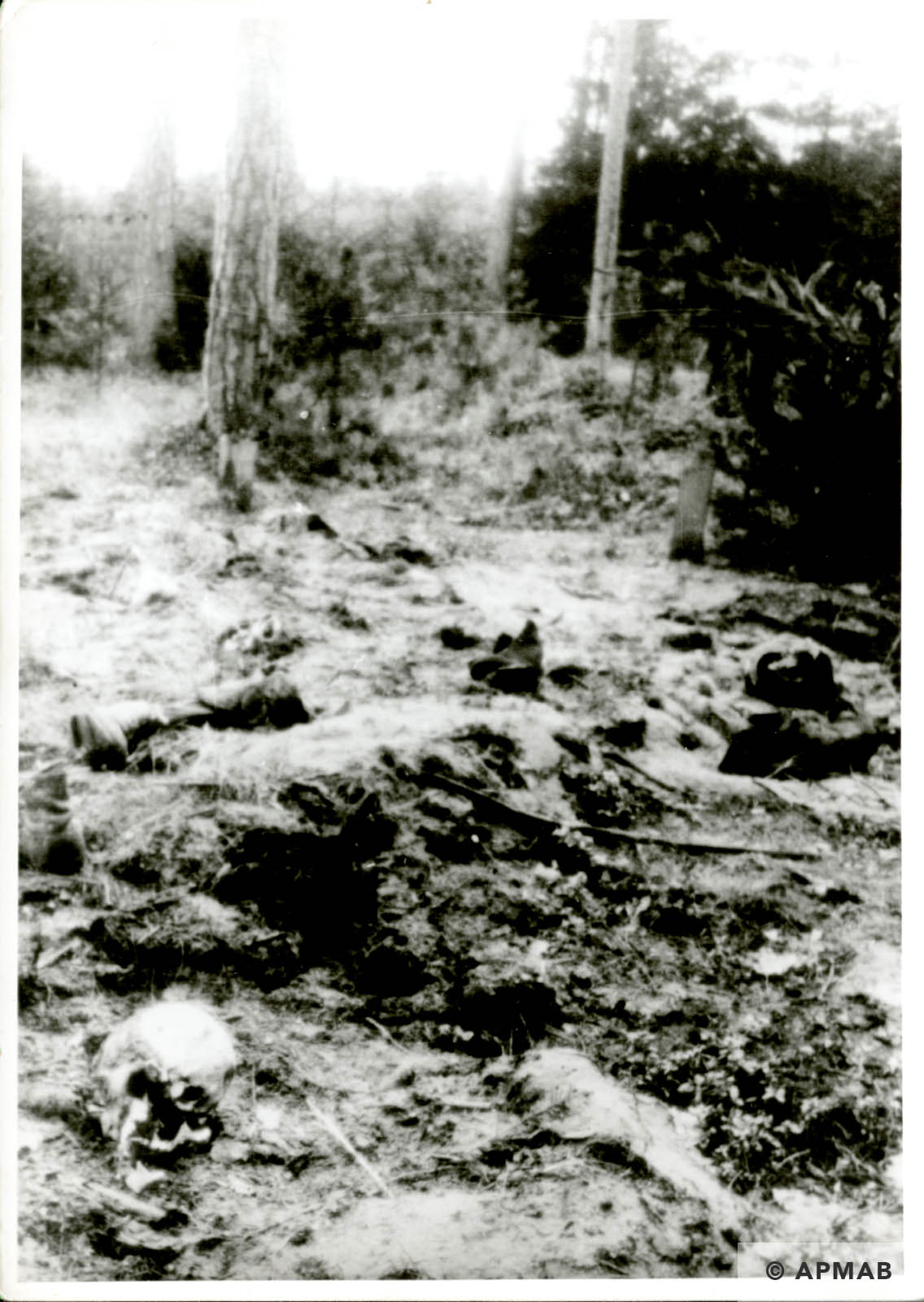Mass grave. Probably 1946 APMAB 6294