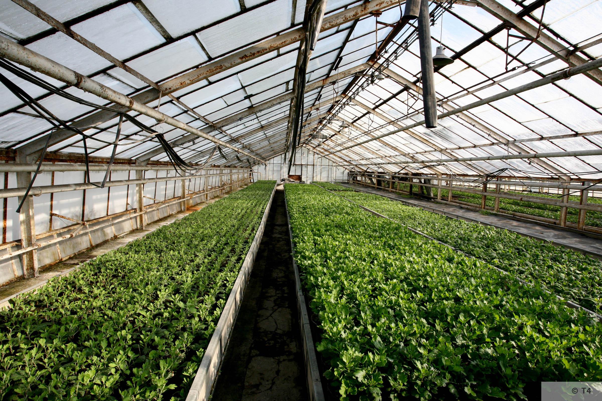 New greenhouses. 2006 T4 5100
