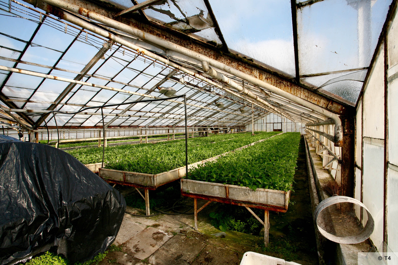 New greenhouses. 2006 T4 5102