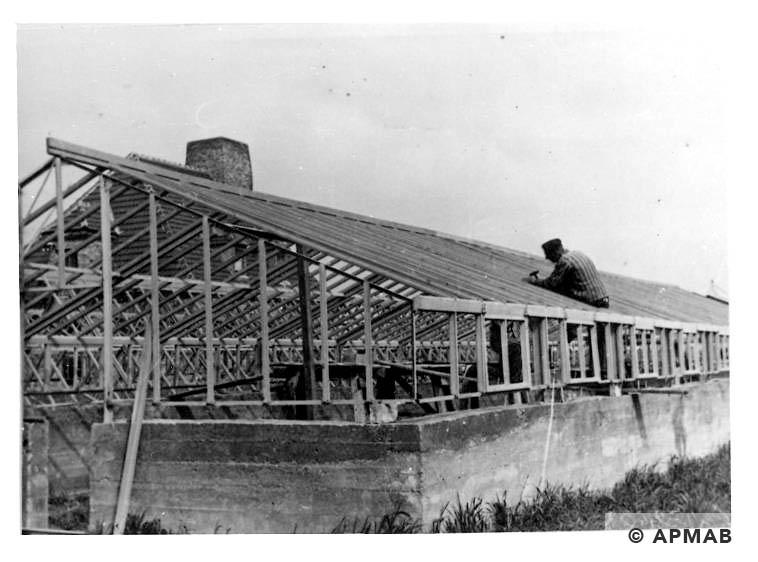 Prisoners work on extenion of glasshouses in Rajsko. Photo by Bauleitung d. Waffen SS u. Polizei KL Auschwitz. APMAB 20995 171