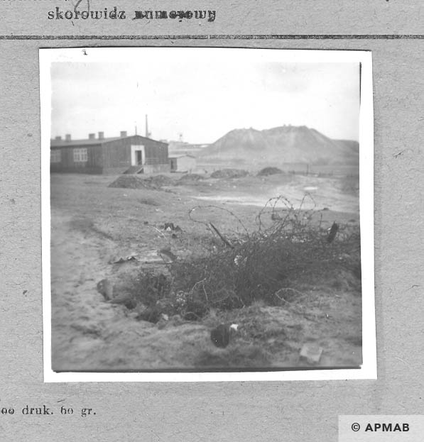 South corner of the camp. In the digging are visible remnants of original barbed wire. 1959 APMAB 4390