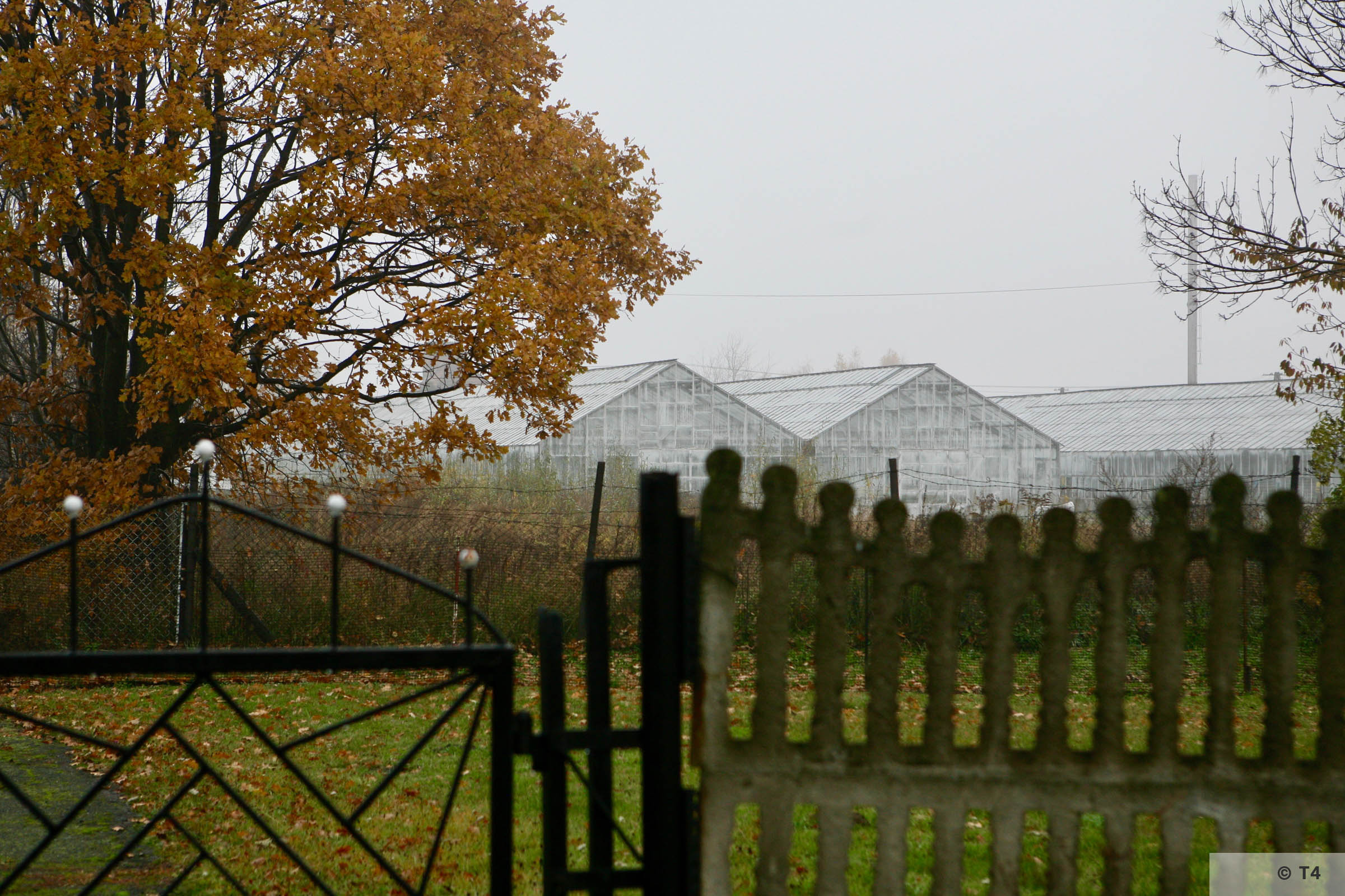 View torwards the glasshouses and horticultural laboratory from area of the sub camp. 2007 T4 2893